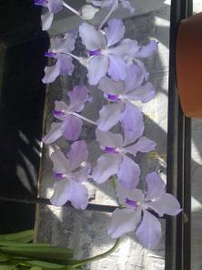 Beauty in my mother's garden