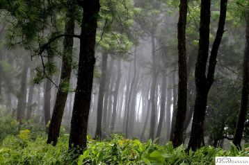 Click in the wood of lamdan in early morning with thick fog...