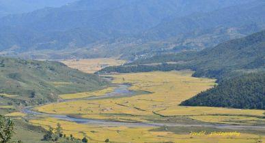Golden field behind blue mountain at Maram
