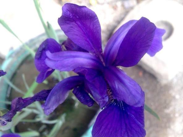 kombirei (nungsinabasingna pinaheidaba aduga leisabisingna chinheidaba lei shetnalei khainalei)