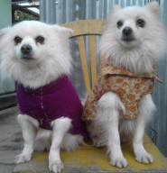 Meet Petty and (Late) Pluto, eleven years old. Unfortunately, Pluto died on Sept 29 this year due to cancer after trying chemo 2 years back. Blessed to have a wonderful Miss who gives us so much love. Picture courtesy : Elizabeth Okram
