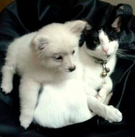I am Boobaa and am adopted by my Master and I love playing with Puchu the cat. Picture Courtesy : Ingudam Manoranjan