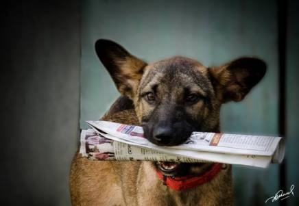 My paper boy- Loya who brings in my morning paper everyday.. Picture courtesy : Devendra Hijam