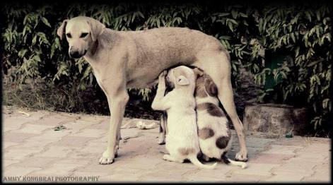 I have no master, I have no name but the love of my kids are unconditional. Picture courtesy : Amit Sharma Kongbrailatpam