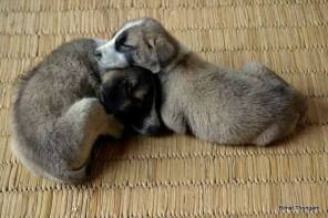 We are part of your family, love and pamper us. We love to snuggle on a cold winter day in Manipur. A picture for dog lovers as pet. A photograph by Bimal Thongam