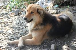 I am Chaoba and when I was just 2 months old my mother went missing, stolen by someone and I still wait for her.Picture courtesy : Shyamo Ingudam