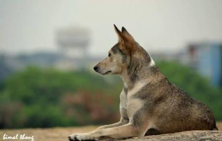 I am waiting for my Master; The wait is long but it will be all worth it; Picture Courtesy : Bimal Thongam