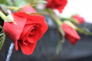 Red Red roses ready at the florist. Maybe it's to surprise your special someone or maybe to make up. Be sure she likes roses. A photograph by Bobo Meitei