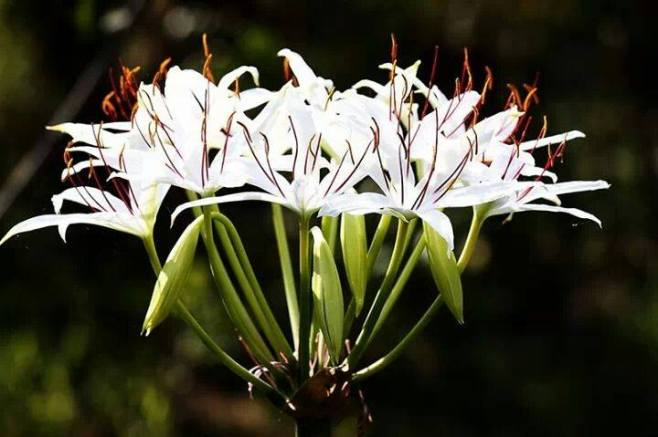 FindingTheVoices_WhiteFlowers (1)