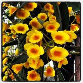 FindingTheVoices_YellowFlowers (14)