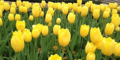 FindingTheVoices_YellowFlowers (6)