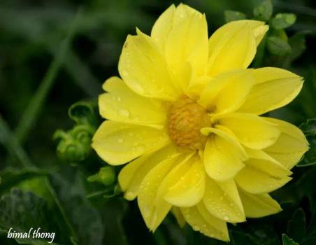 FindingTheVoices_YellowFlowers (7)
