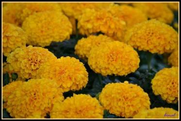 FindingTheVoices_YellowFlowers (8)