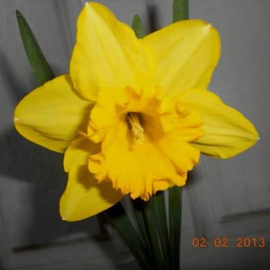 FindingTheVoices_YellowFlowers (9)