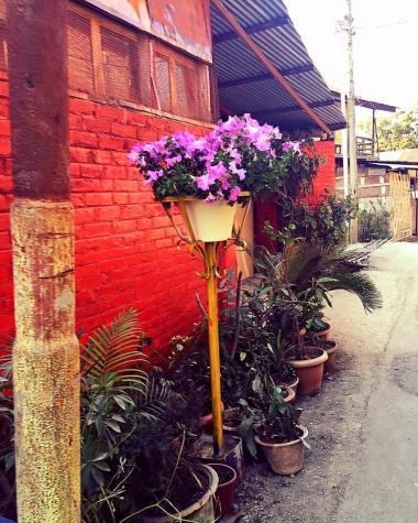 BloomingManipur2
